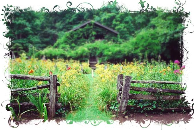 elfhaven lodge garden
