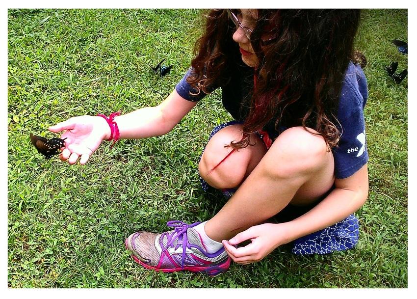 mca md butterflies 2015