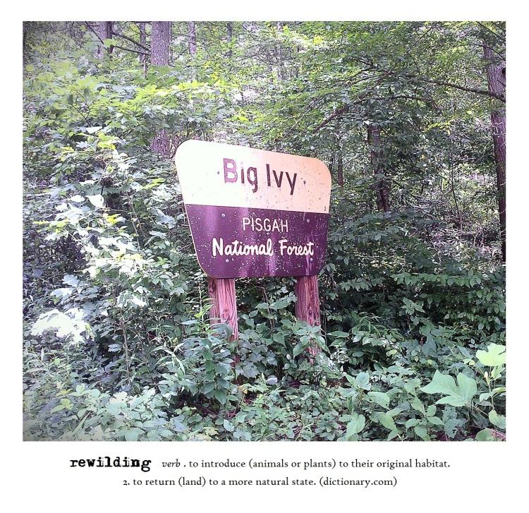 rewilding mca 2015